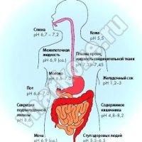 Регуляция и значение кислотно-щелочного состояния организма